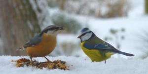 oiseaux-du-jardin